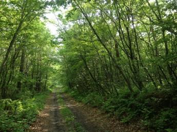 Section C 長野県 浅間山 山麓 林道をゆく