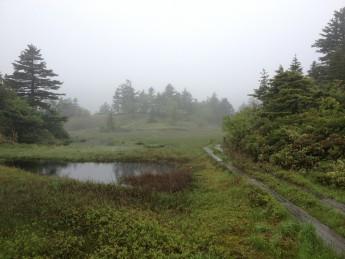 Section D 群馬県 芳ヶ平 湿原の風景。低温下で作られる湿原は、高所もしくは北上した証。