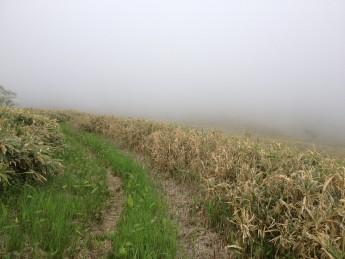 Section D 群馬 長野 県境 歩かなければここも笹に覆われるのも近い
