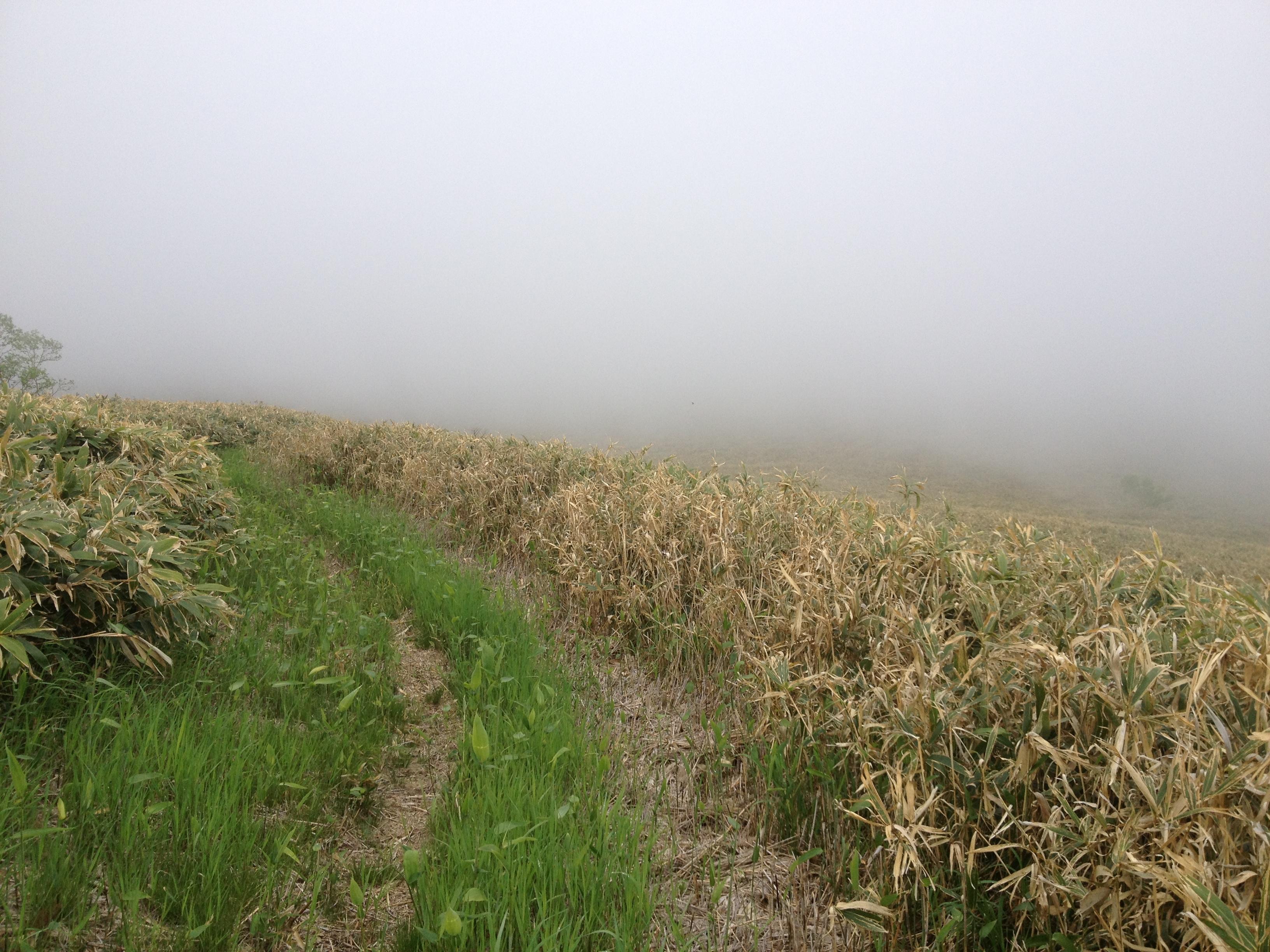 霧に覆われた道