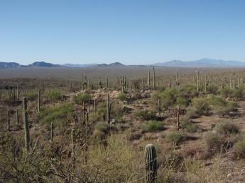 Arizona Trail Tsuson Saguaro National Park