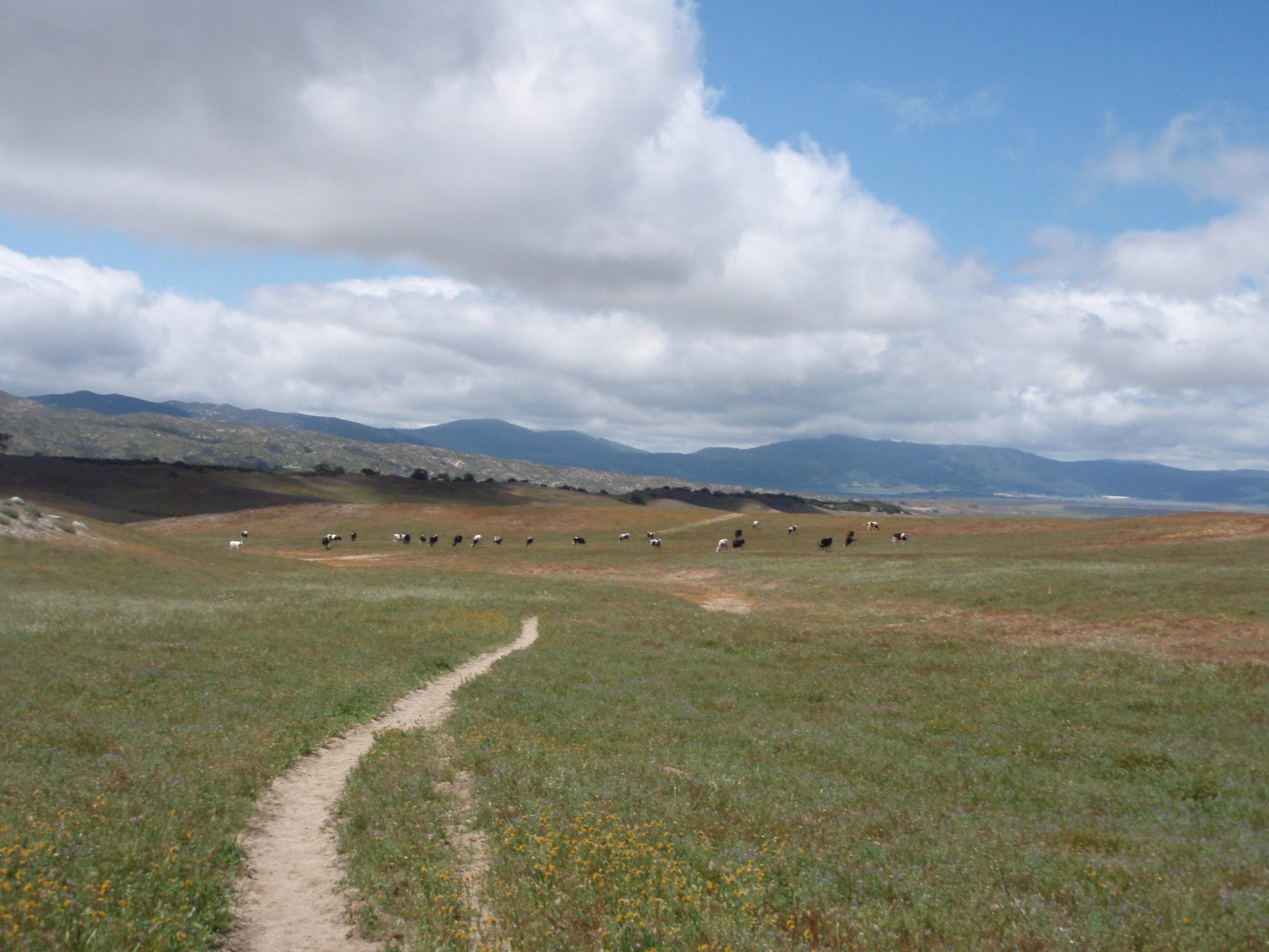 放牧地の道