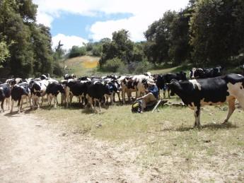 牛さんと休憩
