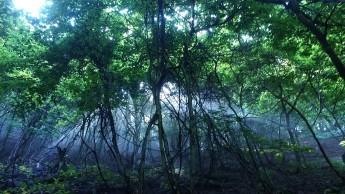 雲取山・樹林帯